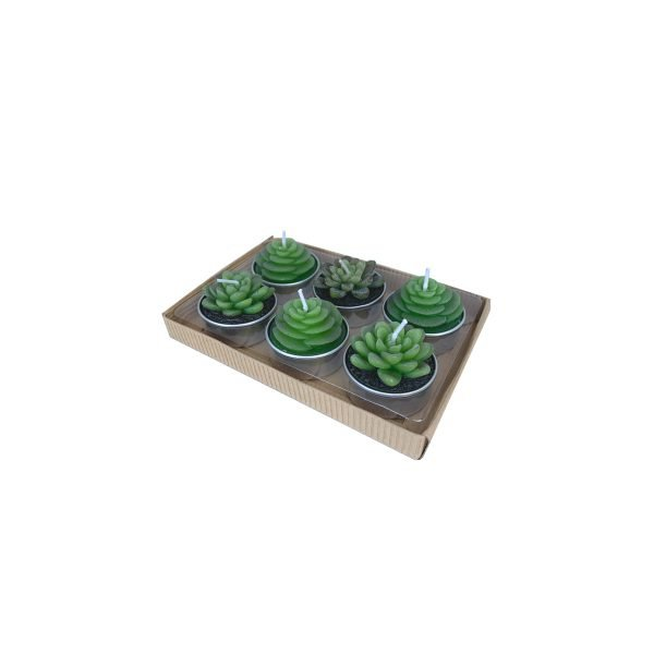 candeline cactus